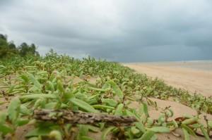 vegetação praia são miguel dos milagres alagoas rota ecológica