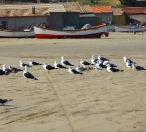 laguna farol de santa marta santa catarina gaivota barcos