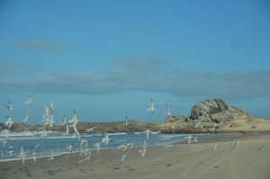 laguna farol de santa marta santa catarina gaivota