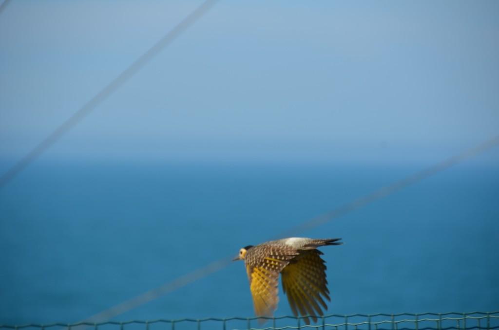 pássaro voando livre oceano azul laguna
