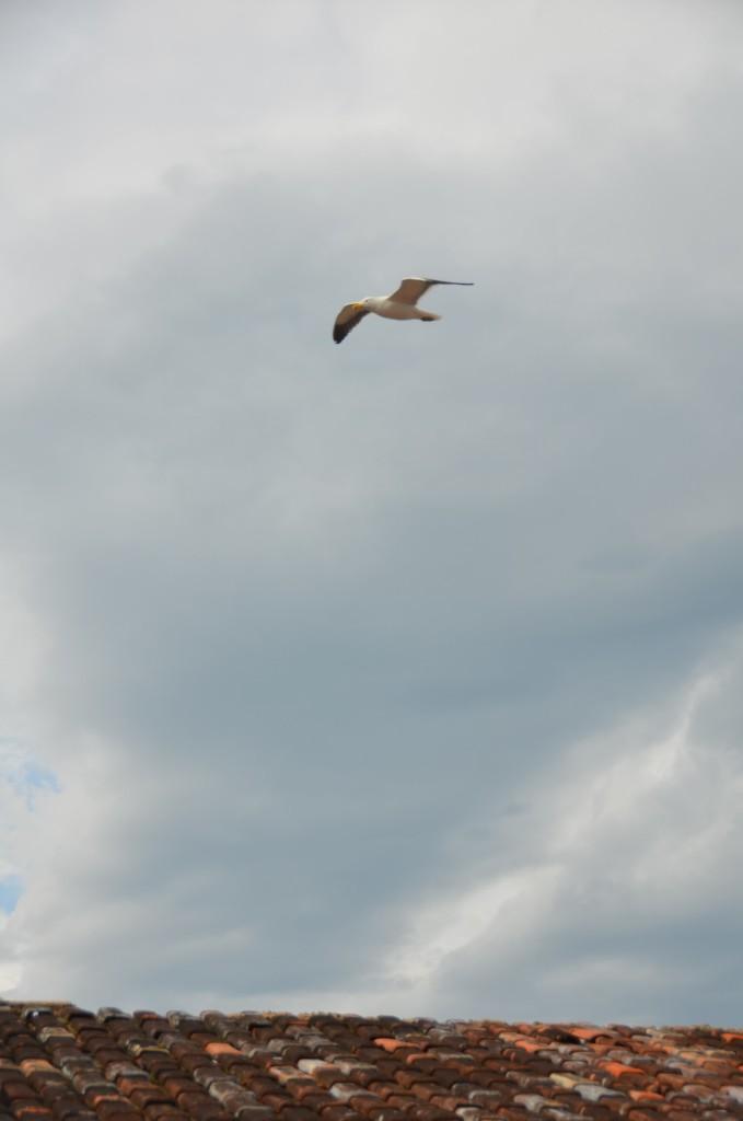 pássaro voando céu nublado