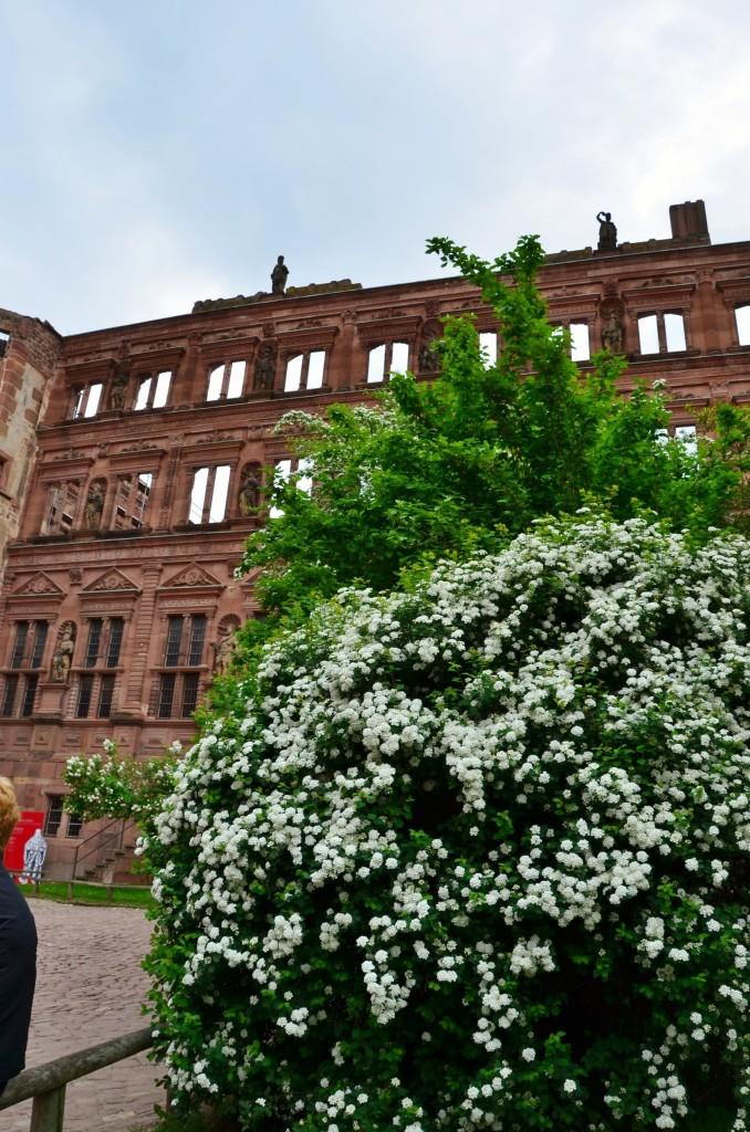 Castelo de Heidelberg flores brancas