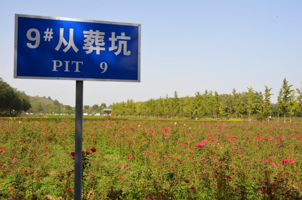 Um imenso jardim de rosas sobre as tumbas do Mausoléu da Imperatriz Wang