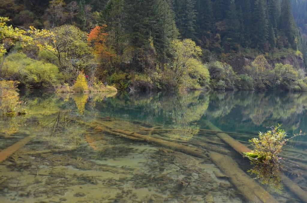 lago azul transparente tronco imerso