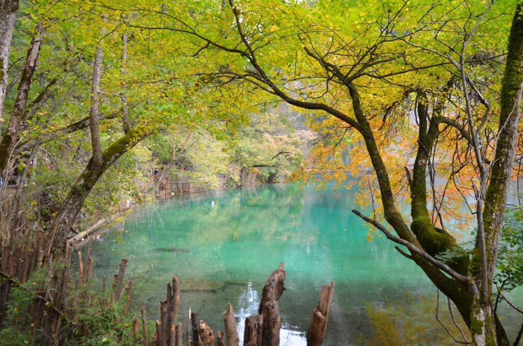 jiuzhaigou parque nacional lagoa azul árvores lugar mais lindo do mundo