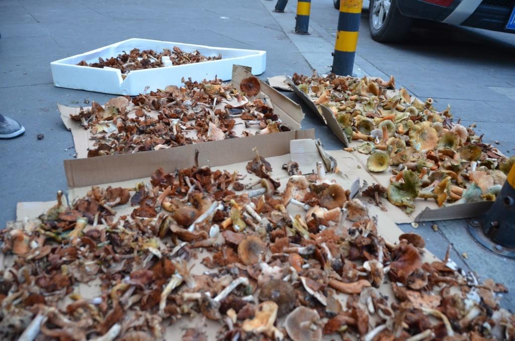 cogumelos mofados china