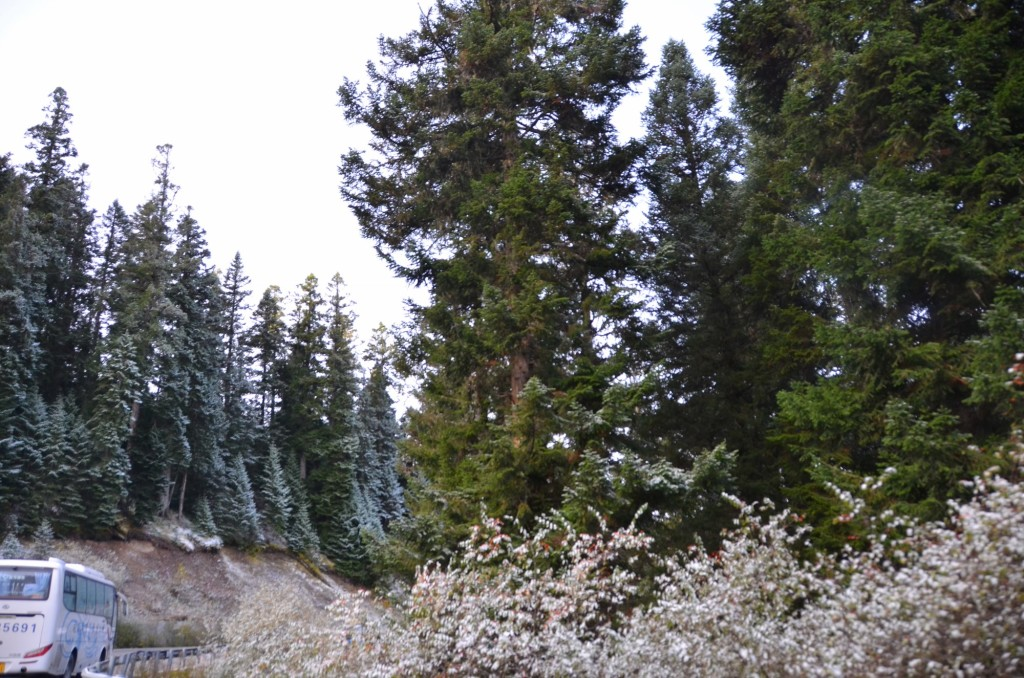 china jiuzhaigou pinheiros neve