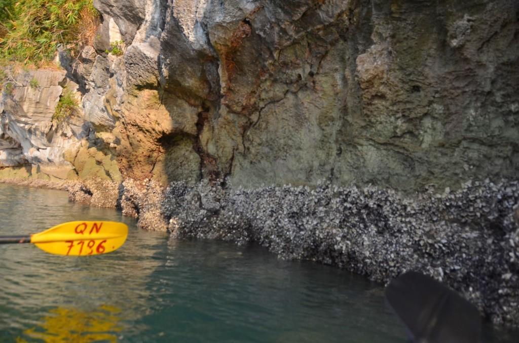 remo parede rochosa crustáceos halong bay