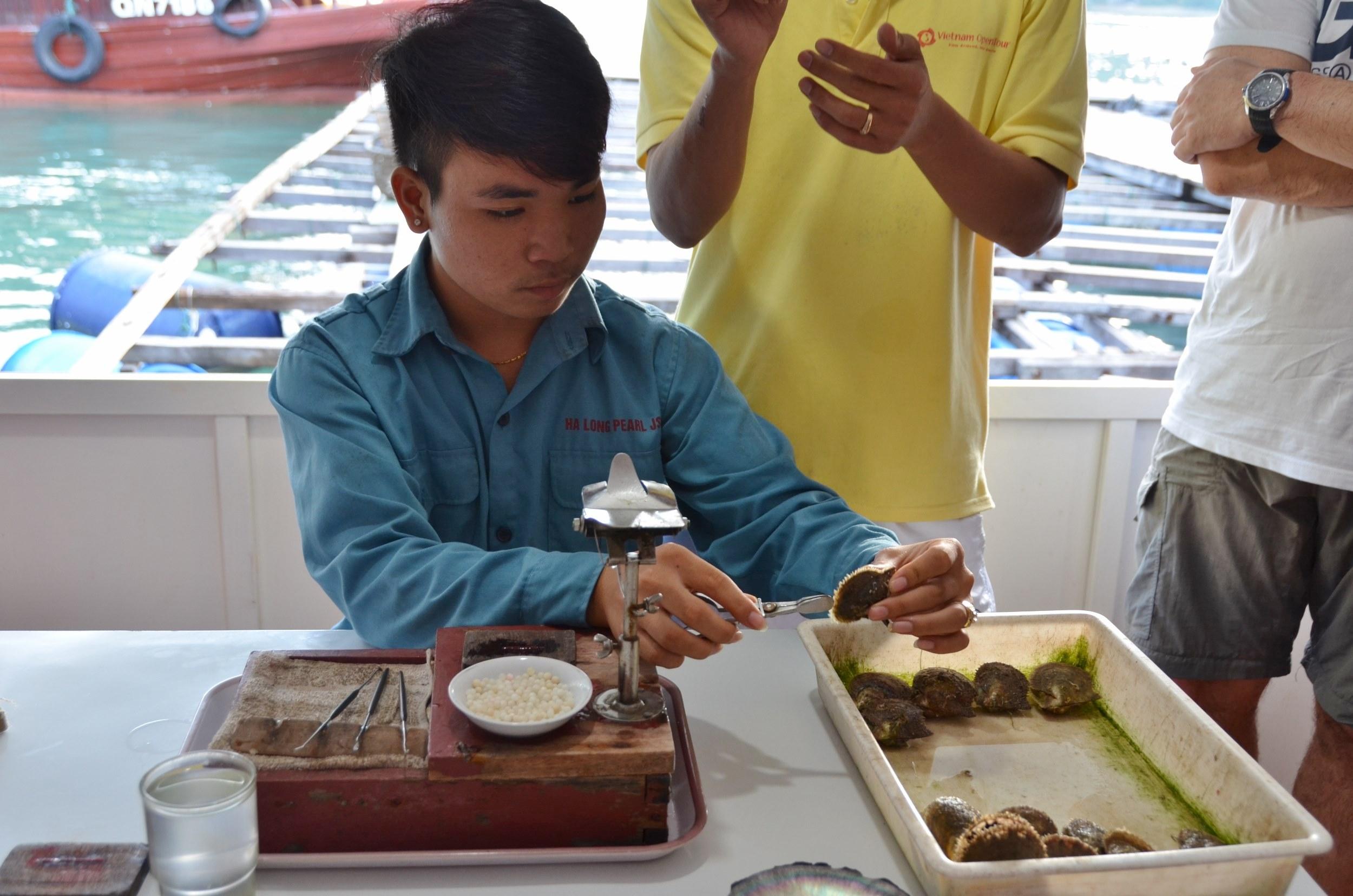 demonstração pérola ostra semear semente
