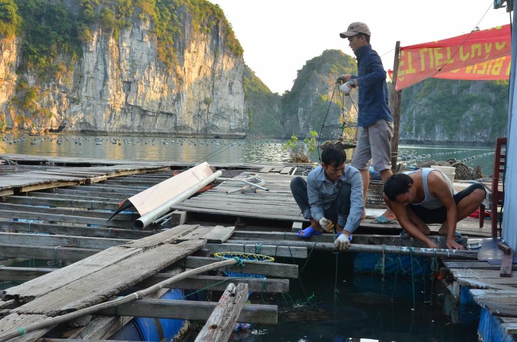 fazenda pérolas cultivadas halong bay vietnam trabalhadores