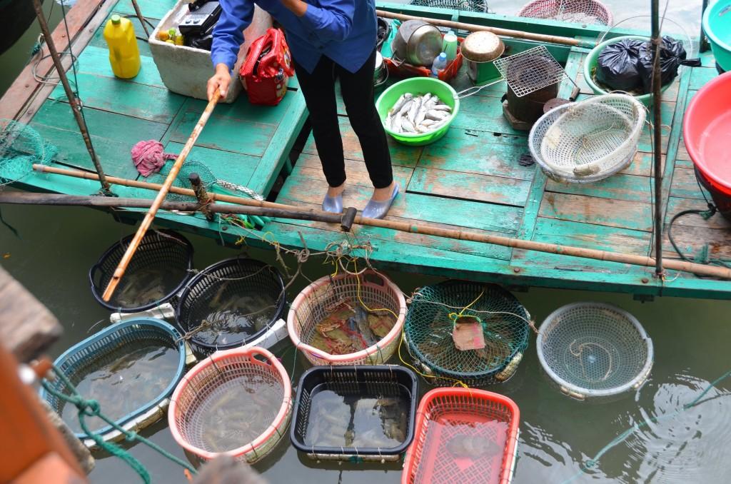 peixes pescadora pescado vietnam bacias barco halong bay