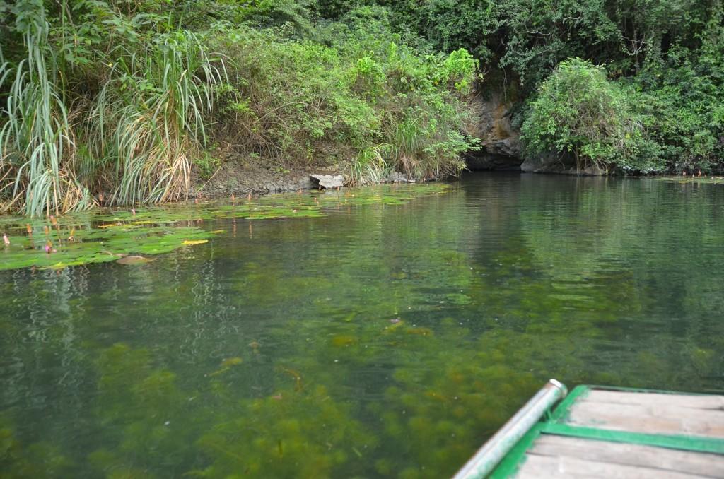 tam coc, trang an, rio transparente, vegetação submersa, barco, vietnam