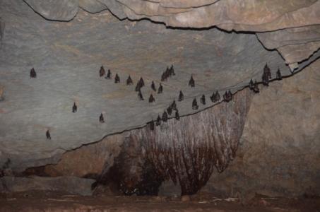 morcego, caverna, dormindo, vietnam, tam coc