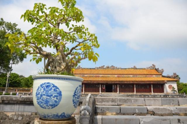 Hué, Vietnam, citadela, cidade imperial, bonsai