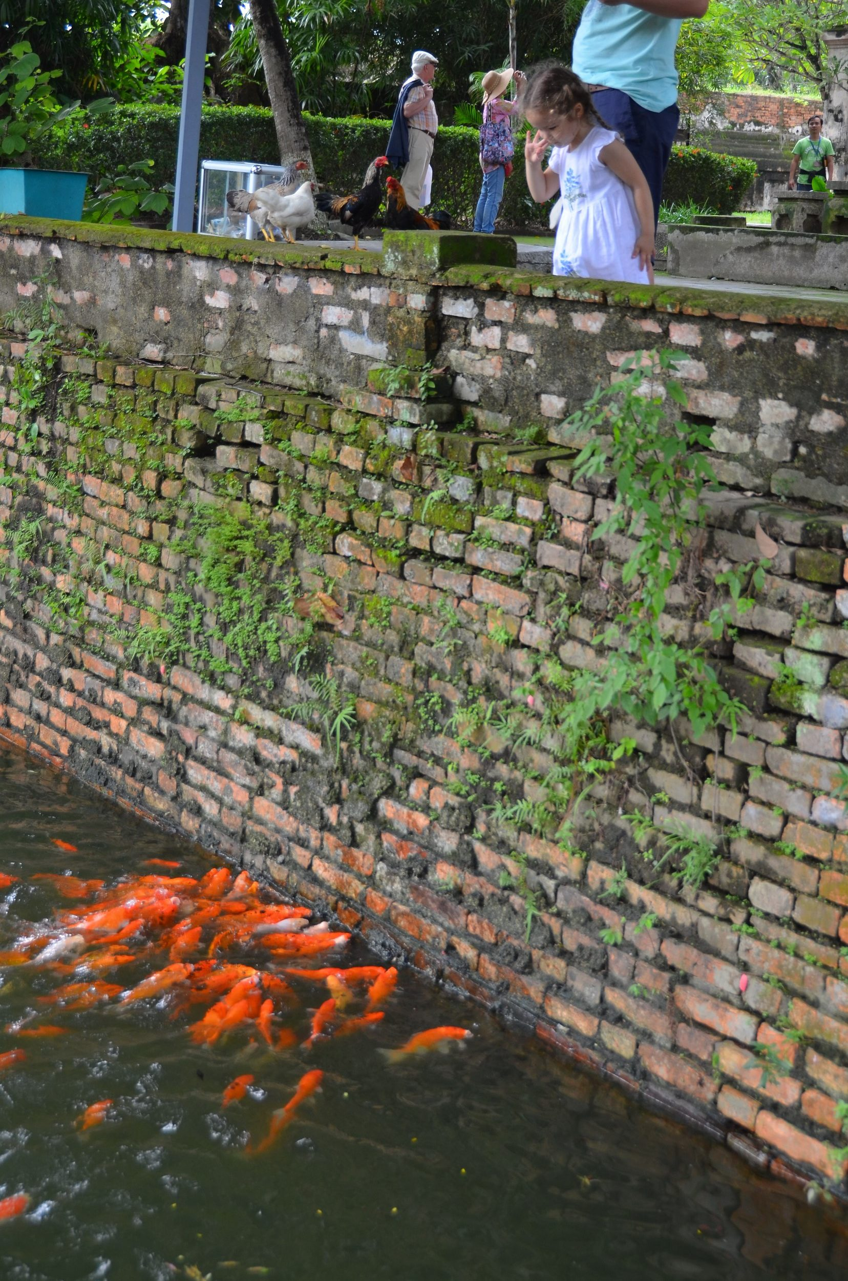 citadela, cidade imperial, Hué, vietnam, peixe