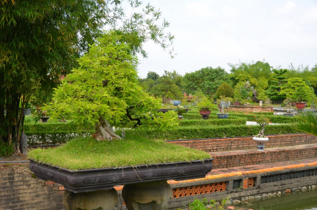 bonsai, vietnam, hué, citadela, cidade imperial